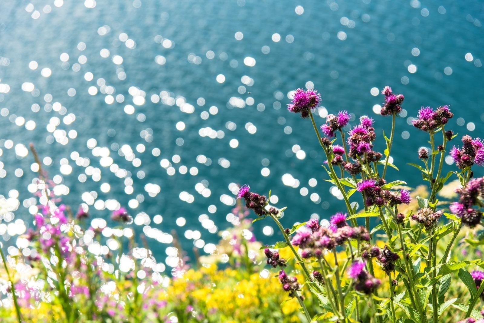 Heidi-Chalet-Falkert-Heidialm-Falkertsee-Natur-Wandern-Blumen