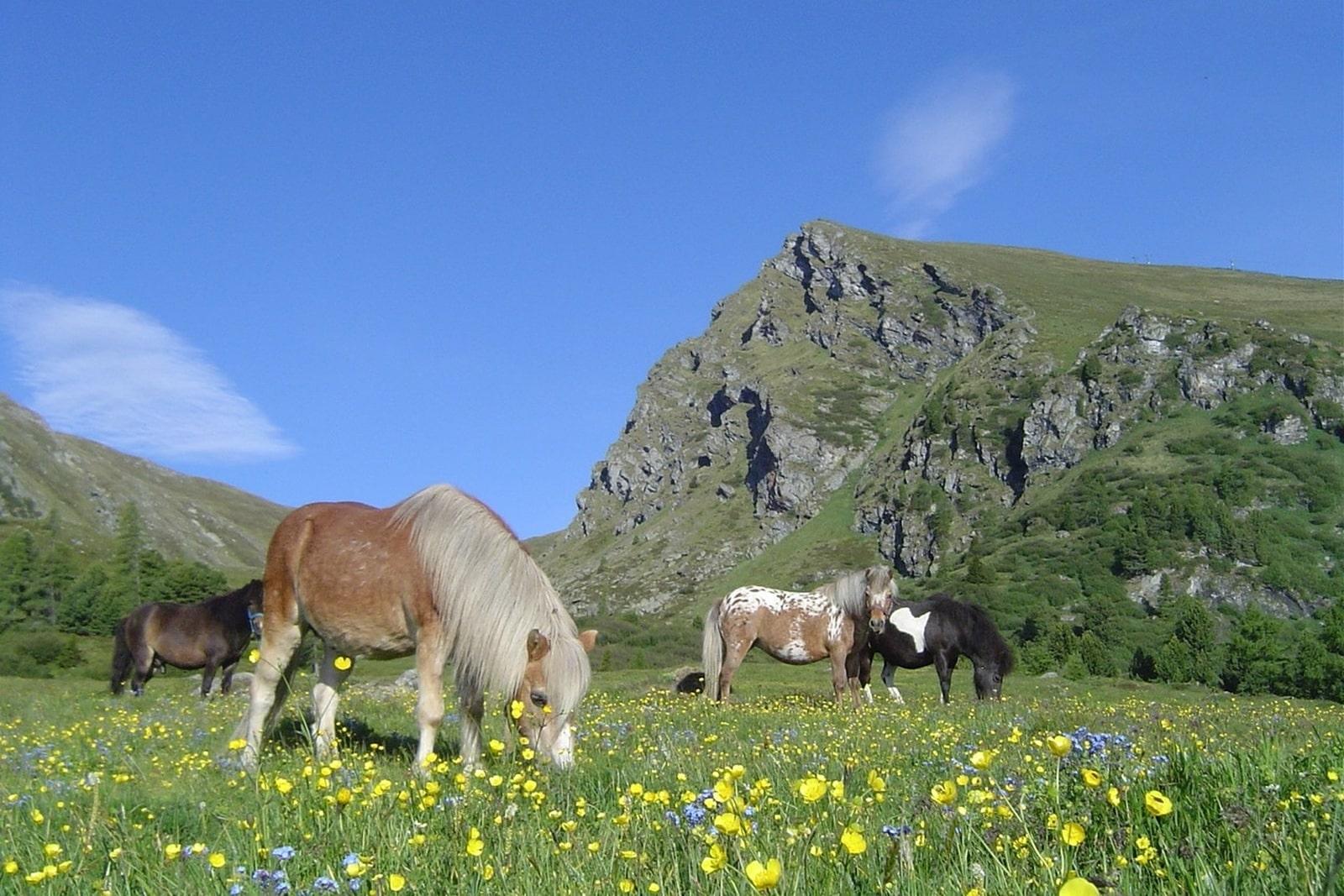 Heidi-Chalet-Falkert-Heidialm-Falkertsee-Natur-Wandern-Pferde